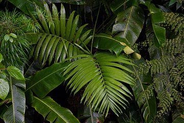 Un beau mur de feuilles vertes photographié dans la jungle sur Bianca ter Riet