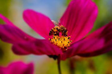 Biene bei der Arbeit von Sandra Estupinan