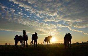 Paarden in het ochtendlicht van