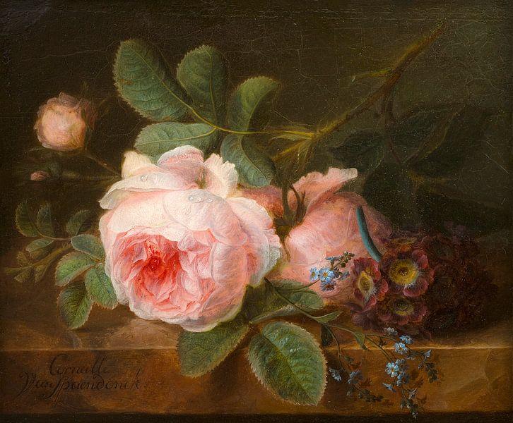 Koolroos, Cornelis van Spaendonck von Meesterlijcke Meesters