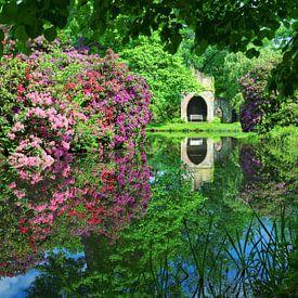 Rhododendron in Full Bloom van Gisela Scheffbuch