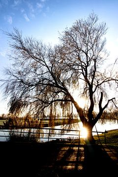 Boom Tree Winter Zoetermeer