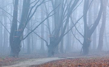 Waldweg im Nebel von Thijs Friederich