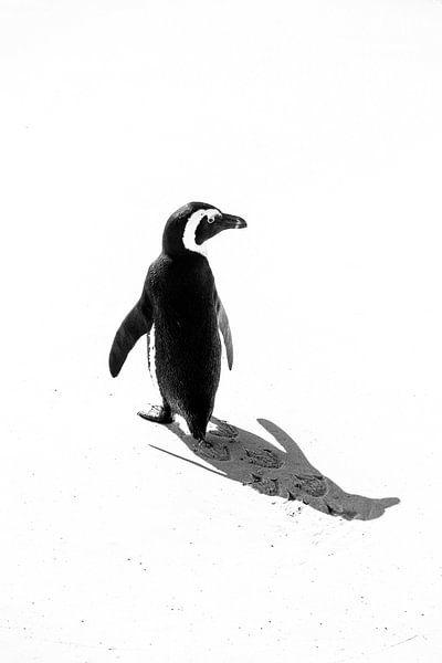Pinguin von Katrin Engl