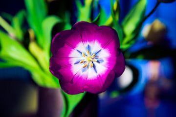Hart van een paarse tulp - abstract van Christine van Rooijen