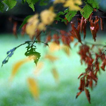 Wiegende herfstbladeren 1 van