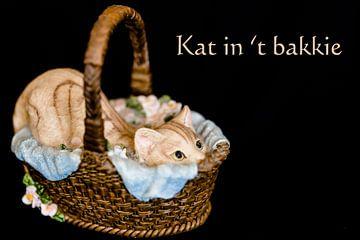 Kat in 't bakkie van Fotografie Jeronimo