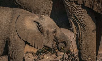 Les larmes que l'on reçoit en mangeant des épines sur Joris Pannemans - Loris Photography