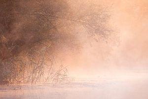 De Brabantse Biesbosch als een sprookje van