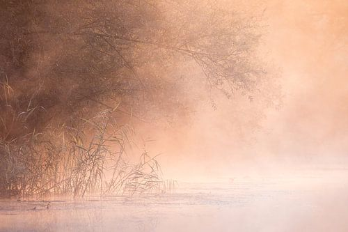 De Brabantse Biesbosch als een sprookje van Judith Borremans