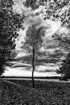 Herfst in zwart-wit van Joke Beers-Blom