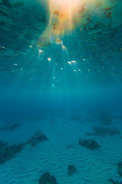Onderwater Bonaire (kleur) van Andy Troy