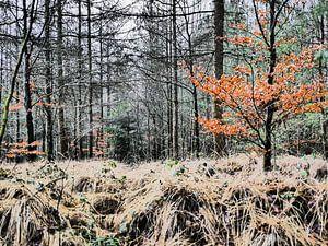 Herfstkleuren van Trees Rommelaere