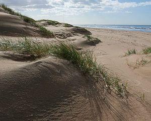 Jonge duinen
