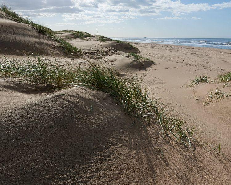 Jonge duinen van Robert Smink