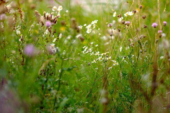 Wildflowers van Arjen Roos