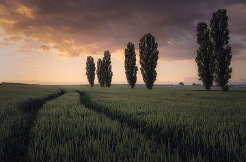 Depth of Field van Joris Pannemans - Loris Photography