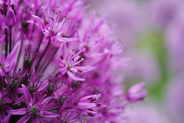 Bloemen von Cynthia Jansen