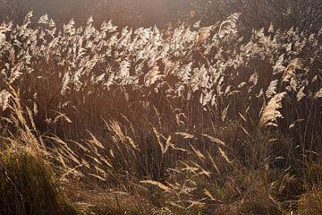 Zon in de duinen van Nicolette Vermeulen