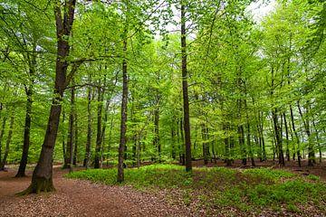 Zomers bos op de Kampina von Nel Diepstraten
