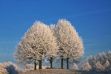 Drei schneebedeckte Bäume von Yvonne Smits