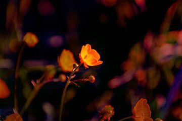 Blumen-Traum 9 von Marcel Kieffer