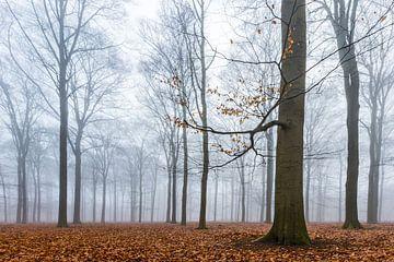 Beukenbos in de mist van Sjaak den Breeje