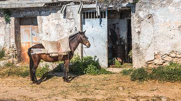 cheval pour une vieille maison en espagne