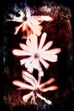 trio van bloeiende magnolia bloemen van Ribbi The Artist