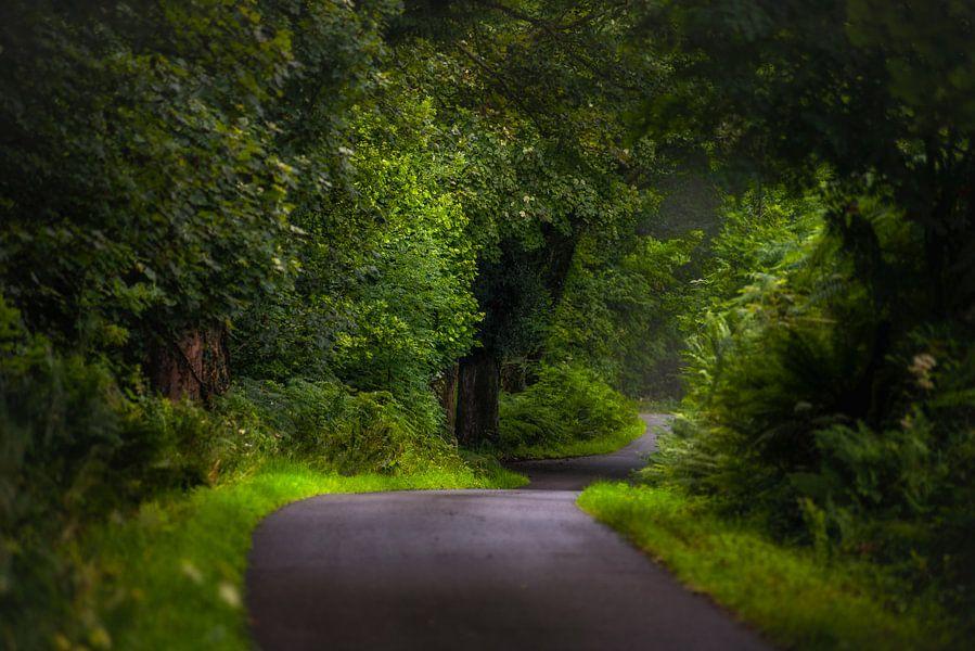 Weg op Ardnamurchan (Schotland)
