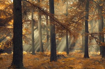 Magical brown van Rob Visser