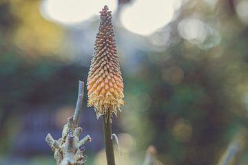 Blumen Teil 168