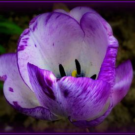Flowerpower van Joyce Derksen