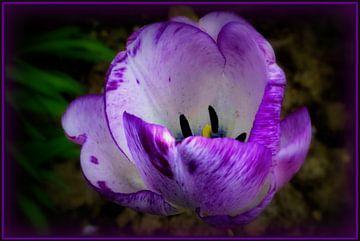 Flowerpower von Joyce Derksen
