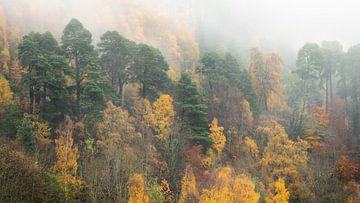 L'automne dans les hauts plateaux d'Ecosse sur Jos Pannekoek
