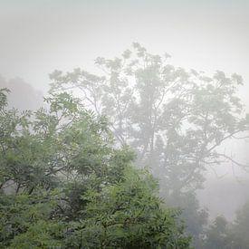 Mist in de zomer van Jan van der Knaap
