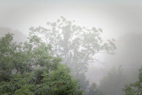 Mist in de zomer