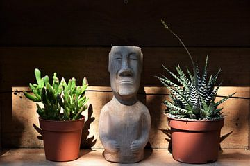 Little Cactus von Beau Dorr