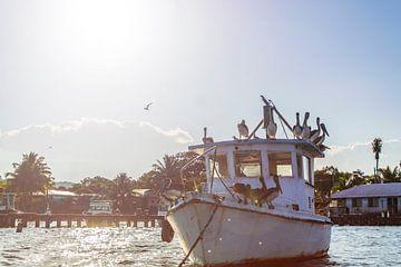 Pelikanen op een scheepswrak van Joost Winkens