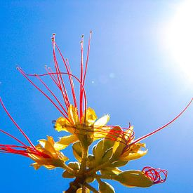 Flower in the Sun van Alejandro Quezada