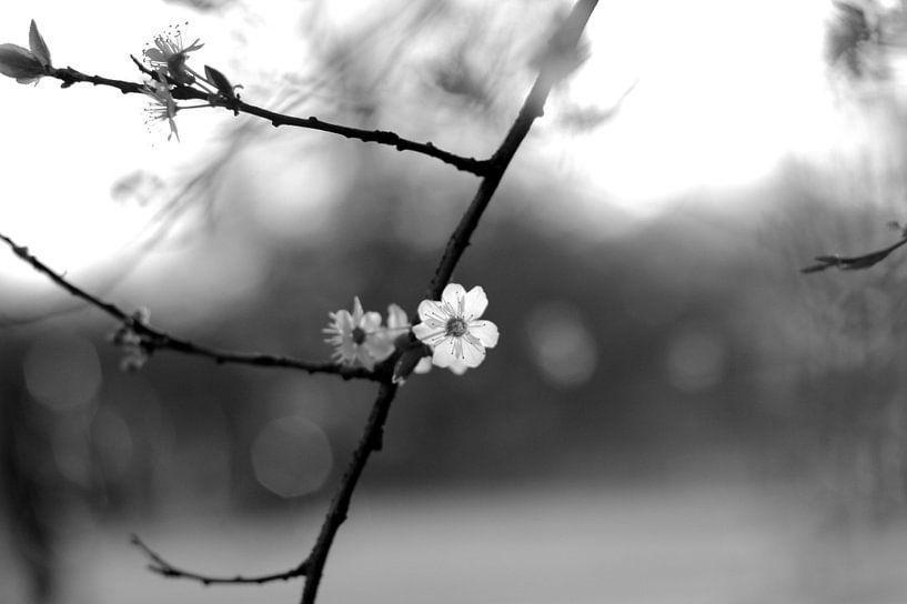 Lente bloesem van Marianna Pobedimova