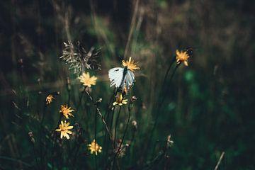 Weißer Schmetterling zwischen gelben Blumen in einer Naturlandschaft der Niederlande von AIM52 Shop