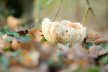 Beige Pilz von Tania Perneel