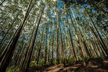 Hoge bomen die de Sri Lankaanse hemel raken van Thijs van Laarhoven
