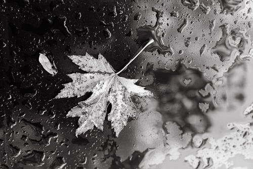 Herfstblaadje in zwart-wit tegen waterdruppels