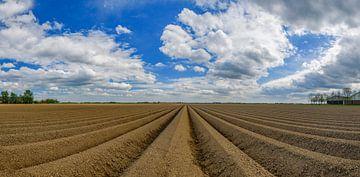 Frisch gepflügtes Kartoffelfeld mit geradlinigem Muster und abnehmender Perspektive in Flevoland an  von Sjoerd van der Wal