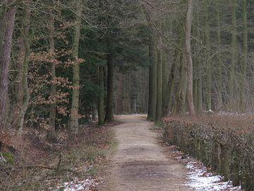 Doorkijk in een bos - look through in a forest - Schauen Sie durch in einem Wald von Ineke Duijzer