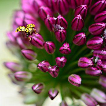 Geel lieveheerstbeestje op sierui van Jessica Berendsen