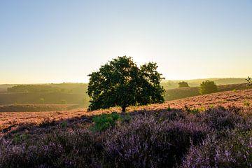 Eenzame boom in de zon! von Wilko Ketelaar