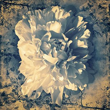 Tulpe der Pfingstrose in einer Vintage-Atmosphäre von Helga Blanke